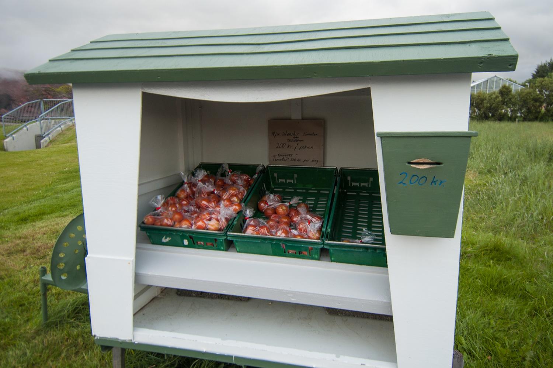 Beaucoup de serres autour des sources chaudes. Ici, laisse 200 Kr. et tu repars avec un sac de bonnes petites tomates. Ce qu'on a fait... Ce fût un bon petit snack!